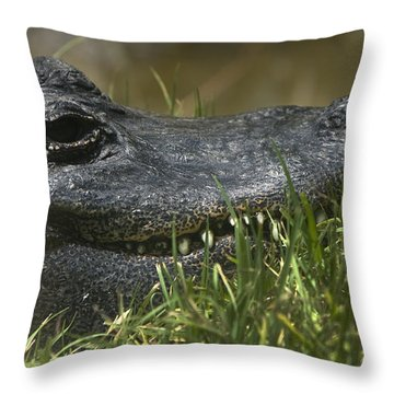 American Alligator Closeup Throw Pillow by David Millenheft