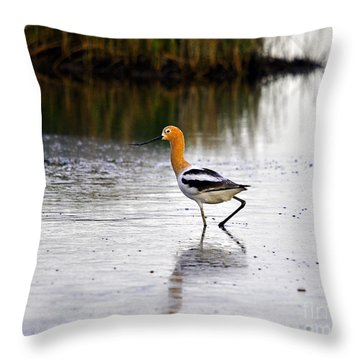 American Avocet Throw Pillow by Al Powell Photography USA