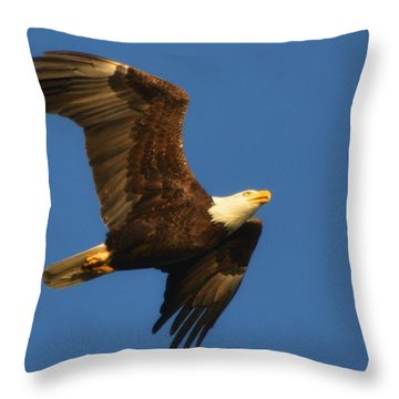 Throw Pillow featuring the photograph American Bald Eagle Close-ups Over Santa Rosa Sound With Blue Skies by Jeff at JSJ Photography