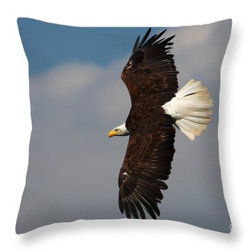 Throw Pillow featuring the photograph American Bald Eagle In Flight by Nick  Biemans