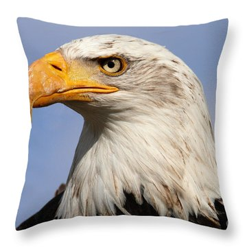 American Bald Eagle Throw Pillow by Nick  Biemans