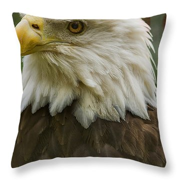 American Bald Eagle With American Flag Background Throw Pillow by Anne Rodkin