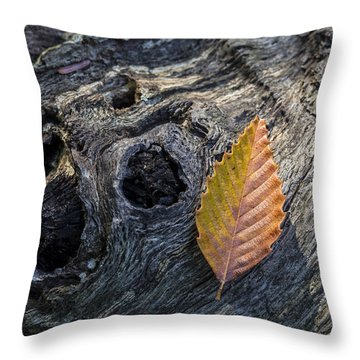Throw Pillow featuring the photograph American Beech Leaf by Andrew Pacheco