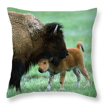 American Bison And Calf Yellowstone Np Throw Pillow by Suzi Eszterhas