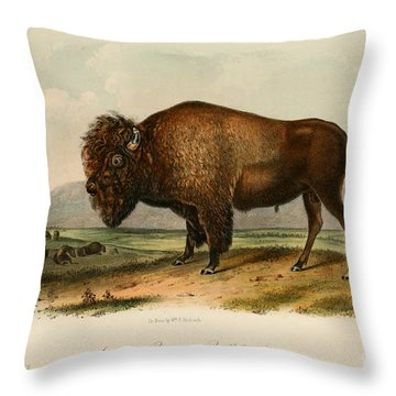 American Bison  Throw Pillow by Celestial Images