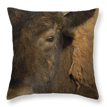 American Bison  Male Wyoming Throw Pillow by Pete Oxford