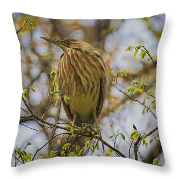 American Bittern Throw Pillow