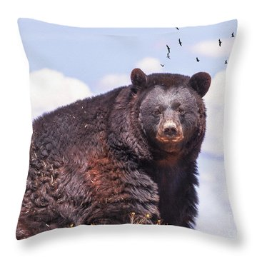 American Black Bear Throw Pillow