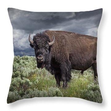 American Buffalo Or Bison In Yellowstone Throw Pillow