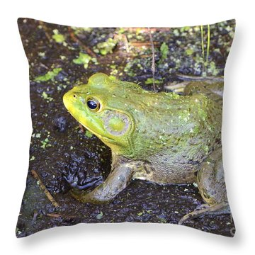 American Bullfrog Throw Pillow by Kathy Gibbons