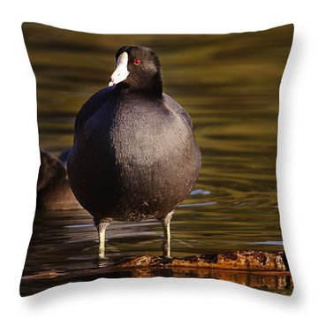 Throw Pillow featuring the photograph American Coot  by Brian Cross