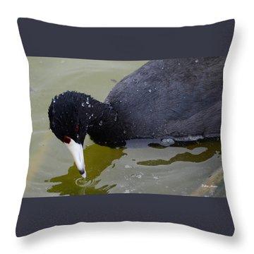 American Coot Throw Pillow by Debra Martz