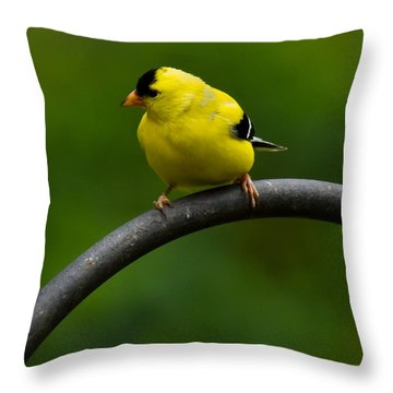 Throw Pillow featuring the photograph American Goldfinch by Robert L Jackson