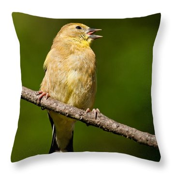 American Goldfinch Singing Throw Pillow by Jeff Goulden