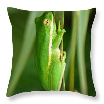 American Green Tree Frog Throw Pillow by Kim Pate
