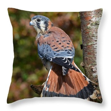 American Kestral Portrait Throw Pillow