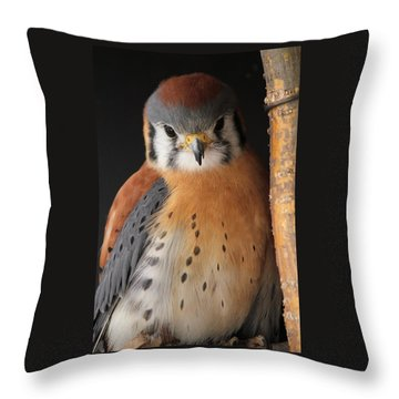 American Kestrel Throw Pillow by Diane Alexander