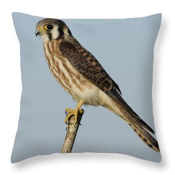 American Kestrel Female Perched Throw Pillow