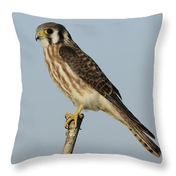 American Kestrel Female Perched Throw Pillow