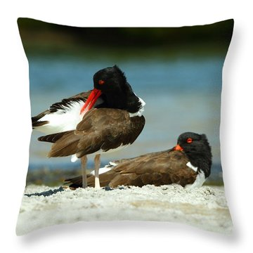 American Oystercatcher Grooming Throw Pillow by Jennifer Zelik