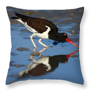 Throw Pillow featuring the photograph American Oystercatcher Mirror by John F Tsumas