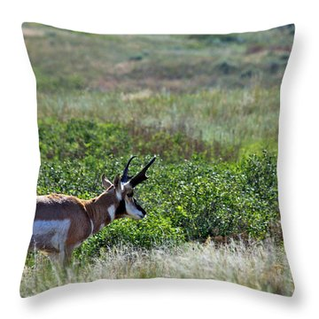 American Pronghorn Buck Throw Pillow by Karon Melillo DeVega