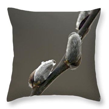American Pussy Willow Throw Pillow