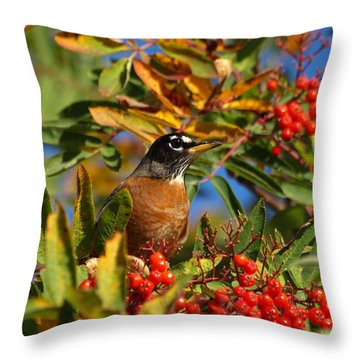 American Robin Throw Pillow by James Peterson
