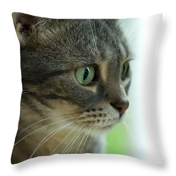 American Shorthair Cat Profile Throw Pillow by Amy Cicconi