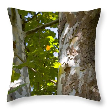 Throw Pillow featuring the photograph American Sycamore by Denise Beverly