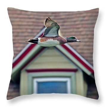 American Wigeon In Flight Throw Pillow