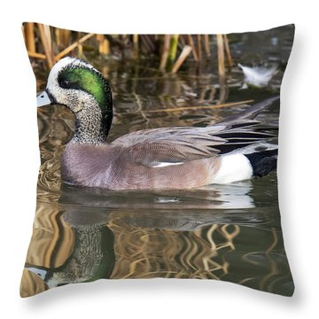 American Wigeon Reflections Throw Pillow