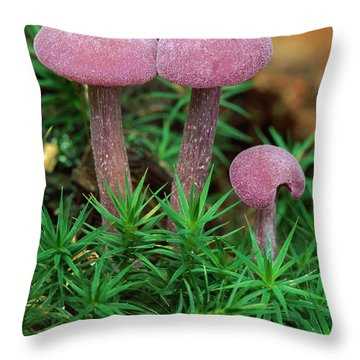 Amethyst Deceiver Throw Pillow by Thomas Marent