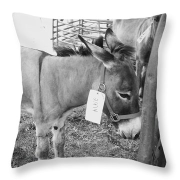 Amish Donkey At Action Throw Pillow by Eric  Schiabor
