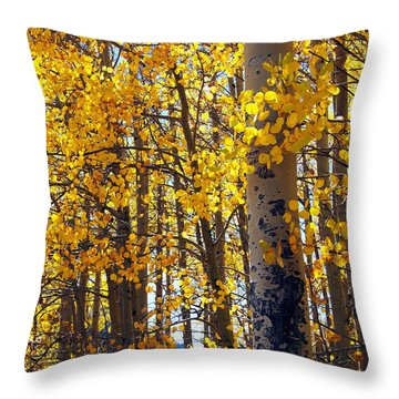 Among The Aspen Trees In Fall Throw Pillow by Amy McDaniel