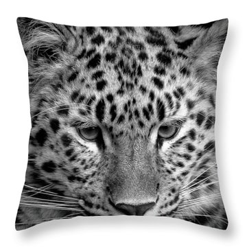 Amur Leopard In Black And White Throw Pillow