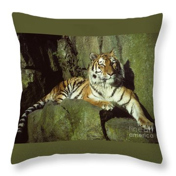 Throw Pillow featuring the photograph Amur Tiger by Phil Banks