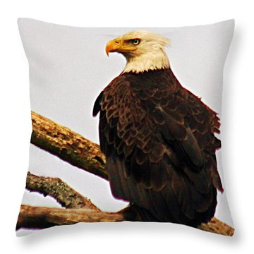 An Eagle's Perch Throw Pillow