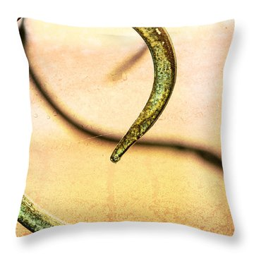 An Echoed Spiral Throw Pillow