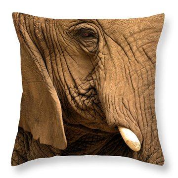 Throw Pillow featuring the photograph An Elephant's Eye by Nadalyn Larsen