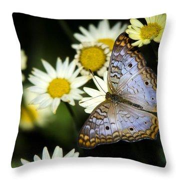 Anartia Jatrophae Throw Pillow