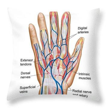 Web space anatomy