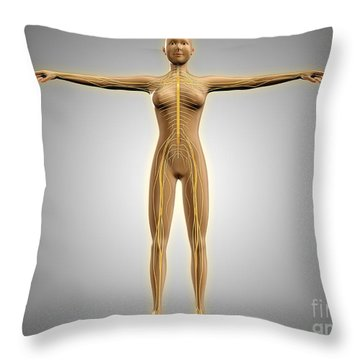 Anatomy Of Female Body With Nervous Throw Pillow by Stocktrek Images