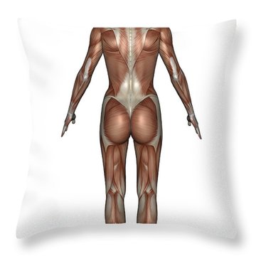 Anatomy Of Female Muscular System, Back Throw Pillow