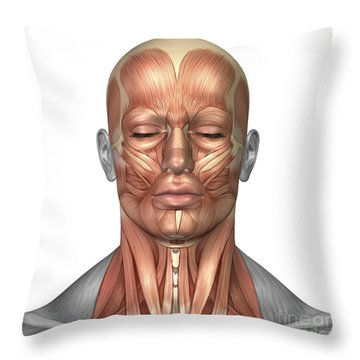 Anatomy Of Human Face And Neck Muscles Throw Pillow