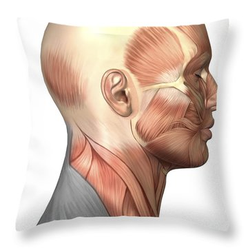 Anatomy Of Human Face Muscles, Side Throw Pillow