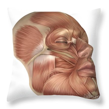 Anatomy Of Human Face Muscles Throw Pillow