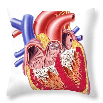 Anatomy Of Human Heart, Cross Section Throw Pillow by Leonello Calvetti