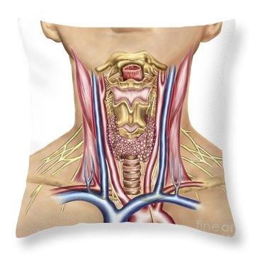 Anatomy Of Human Neck Throw Pillow