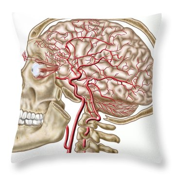 Anatomy Of Human Skull, Eyeball Throw Pillow by Stocktrek Images